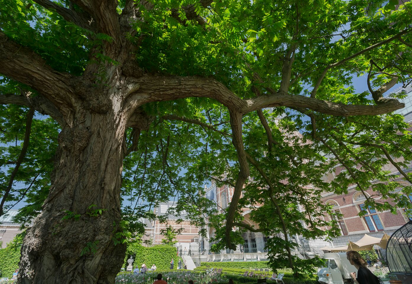 La sombra de un árbol...y pensar...