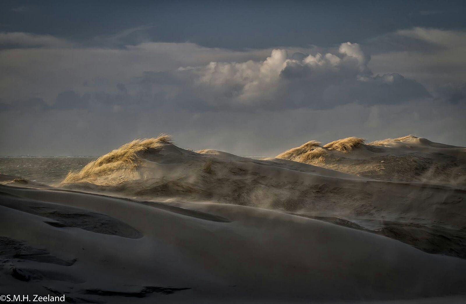 Las dunas en la distancia parecen sabanas acariciadas por el viento