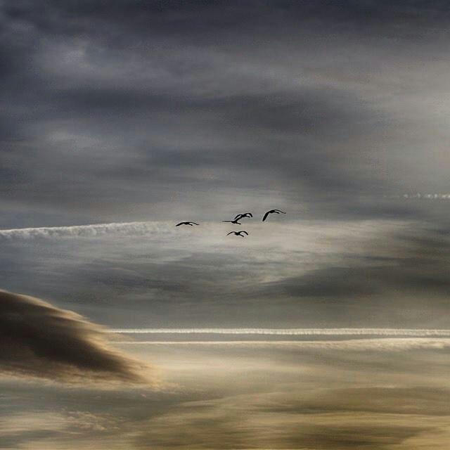 Los pájaros sobrevuelan la playa...