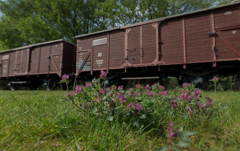 Kamp Amersfoort y Westerbork; campos de concentración, reubicación, castigo... - Maica Rivera