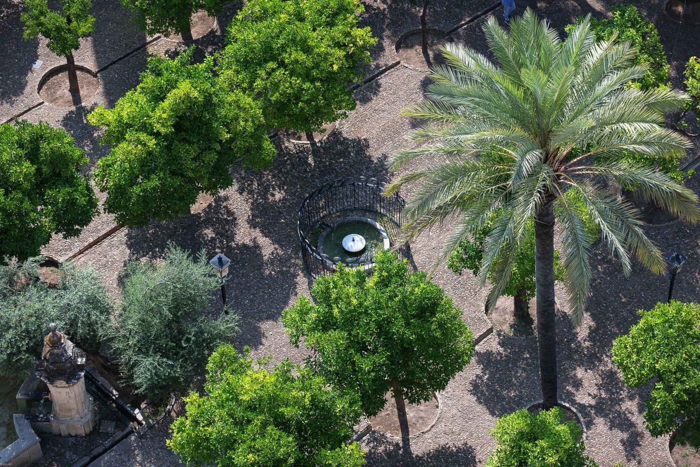 El Patio de los Naranjos...fueron plantados en el siglo XIII