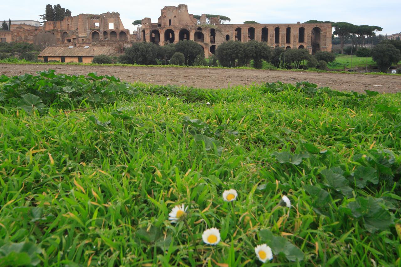 El Palatino...debajo de esas flores parte de historia enterrada está
