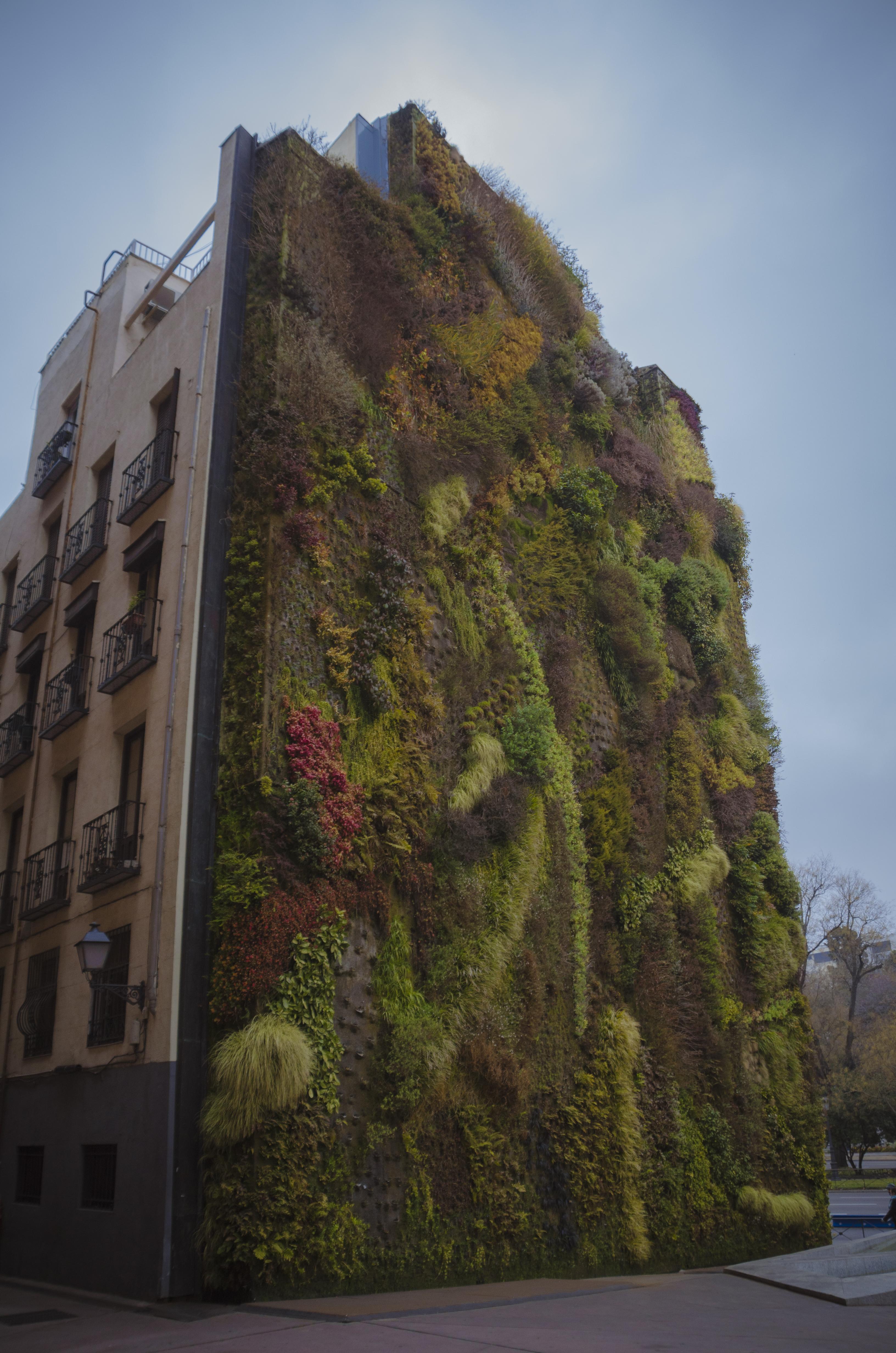 Jardín vertical en el que las plantas son alegoría de las alas que otorgan las musas