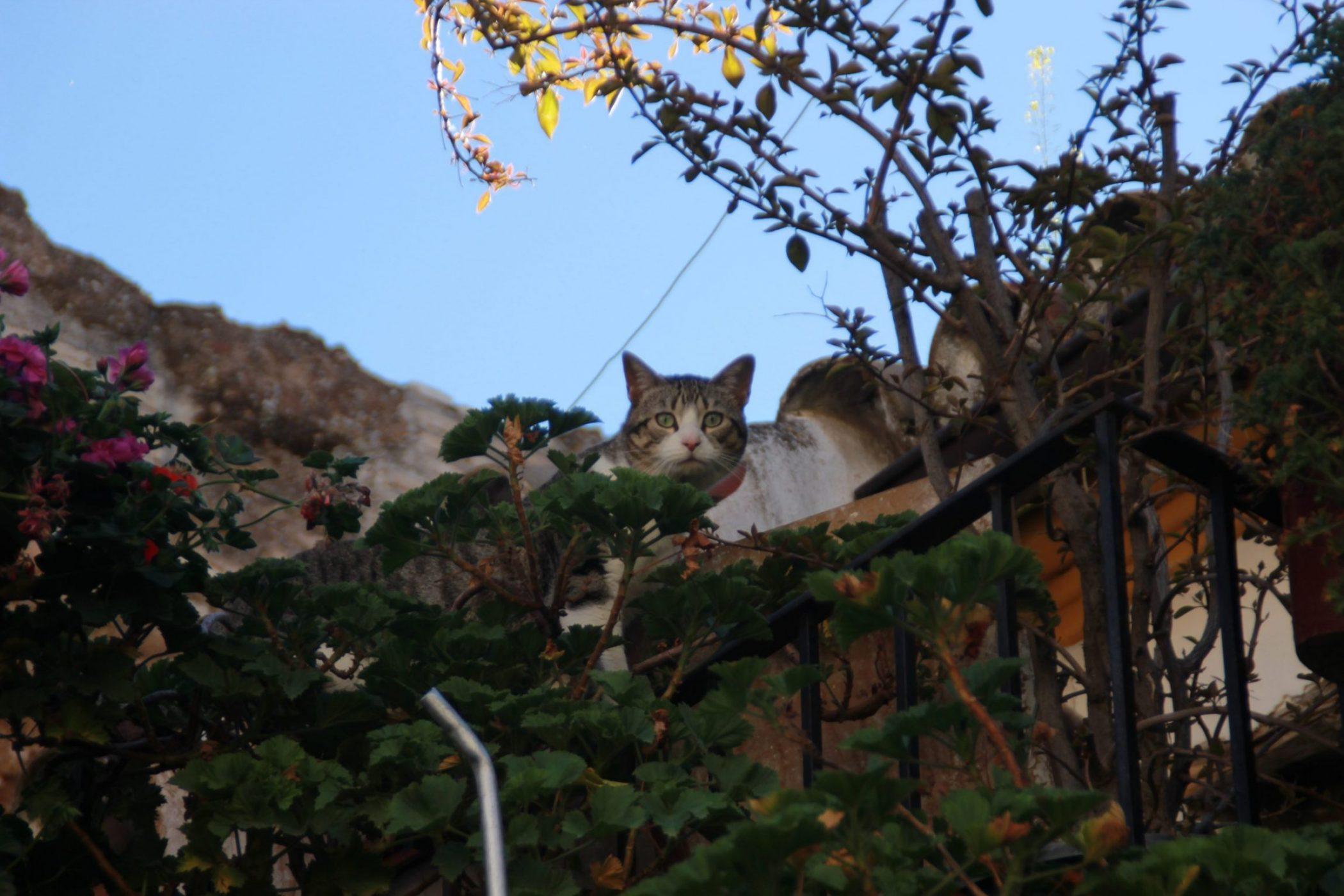 Incluso los gatos perciben que son lugares especiales y únicos